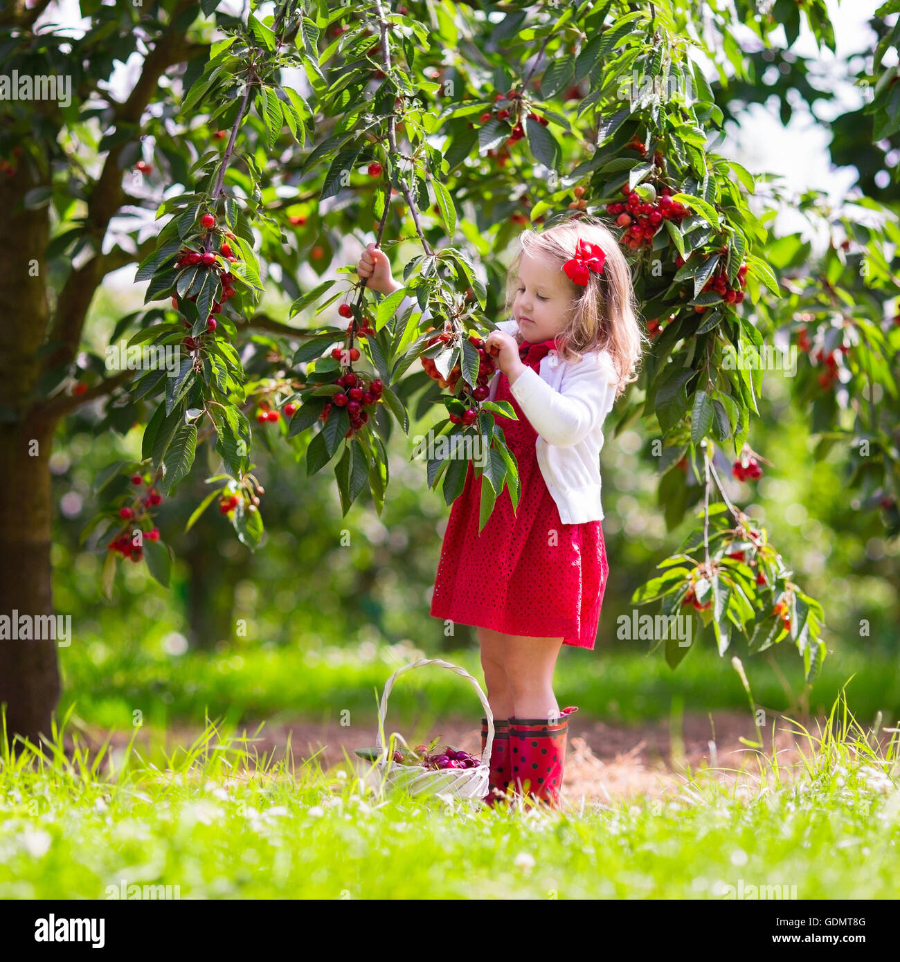 34   Cool fruit farm for Fruit Farm Photography  76uhy