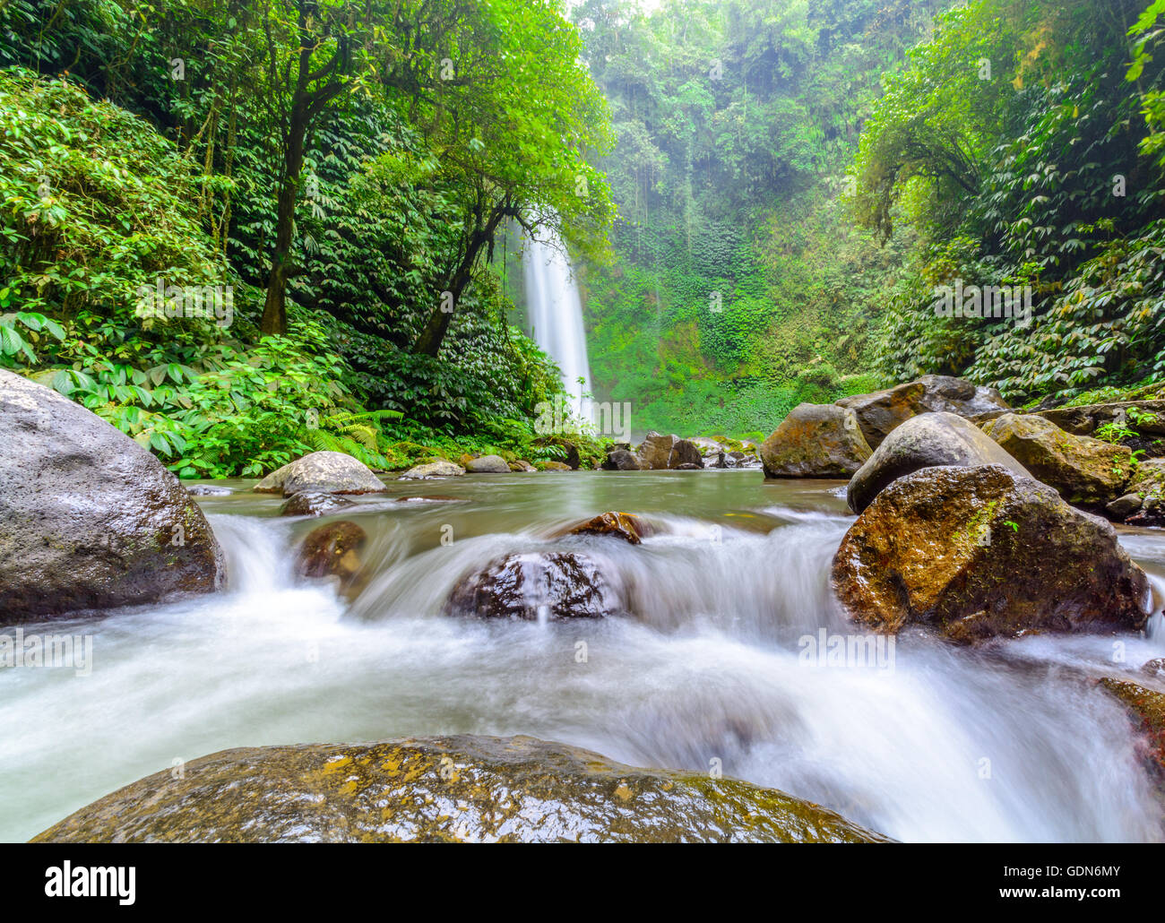 Lush, Pristine, Emerald Green, Tropical Forest In Mountainous ...