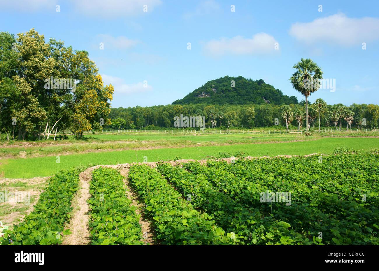 Beautiful landscape vietnam gallery diagram writing sample and guide beautiful landscape of vietnamese village at mekong delta vietnam beautiful landscape of vietnamese village at mekong sciox Choice Image
