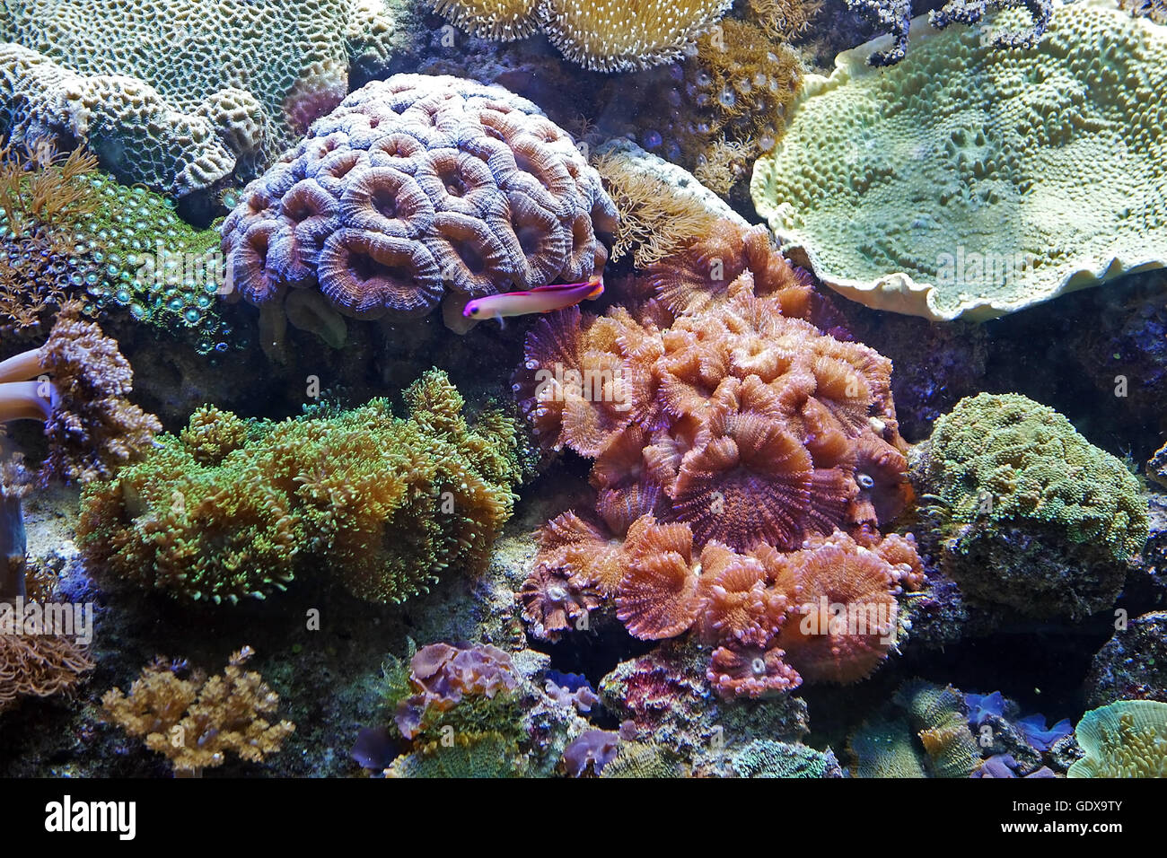 Beautiful photograph of colorful coral reef and algae for Underwater pond plants
