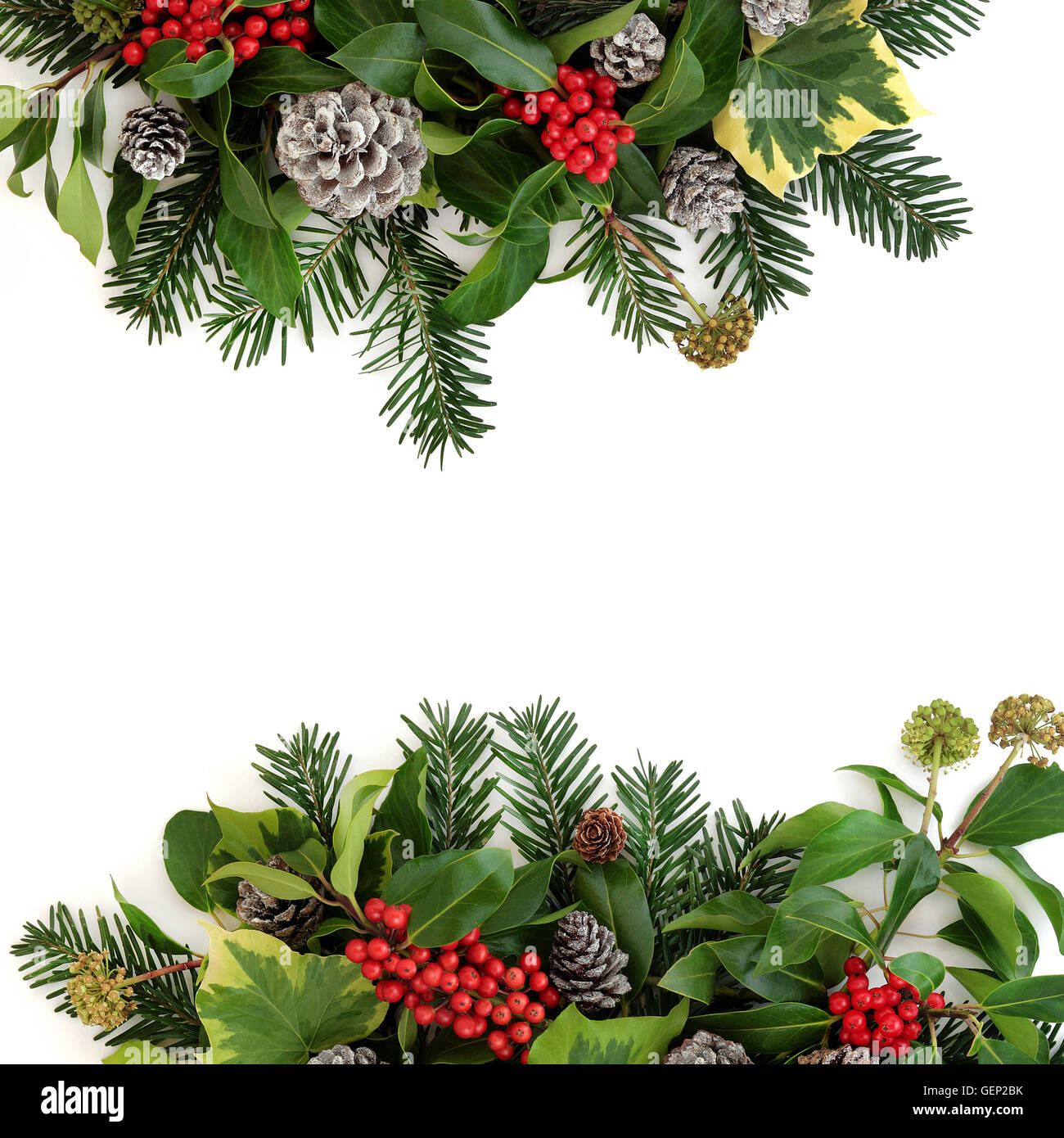 Why is holly a traditional christmas decoration - Stock Photo Traditional Winter Floral Border With Holly And Red Berries Ivy Snow Covered Pine Cones And Fir Over White Background