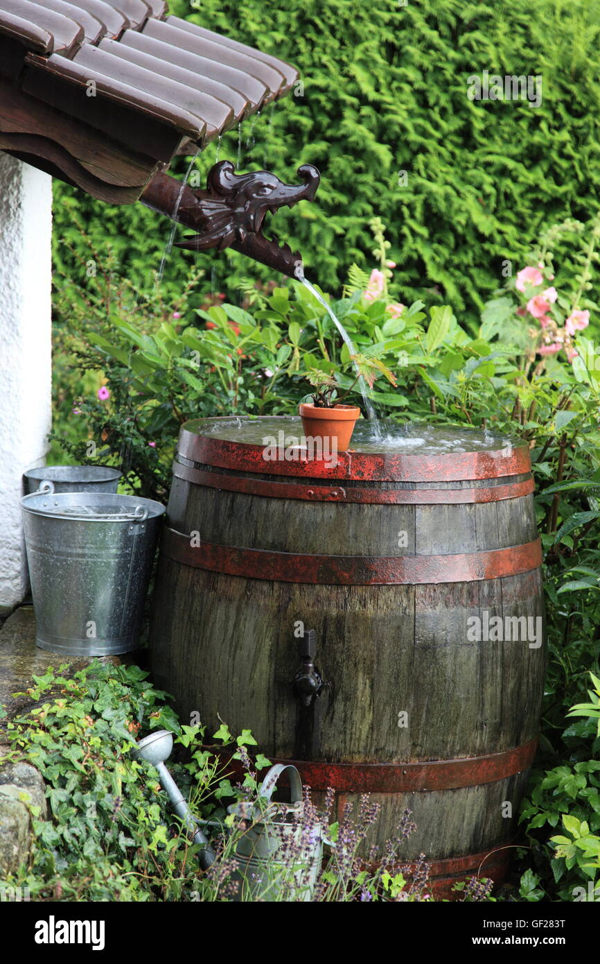Stock Photo   Old Wooden Wine Barrel (water Butt) In Garden Collecting  Rainwater During Severe Rainfall. Germany. Photo By Willy Matheisl