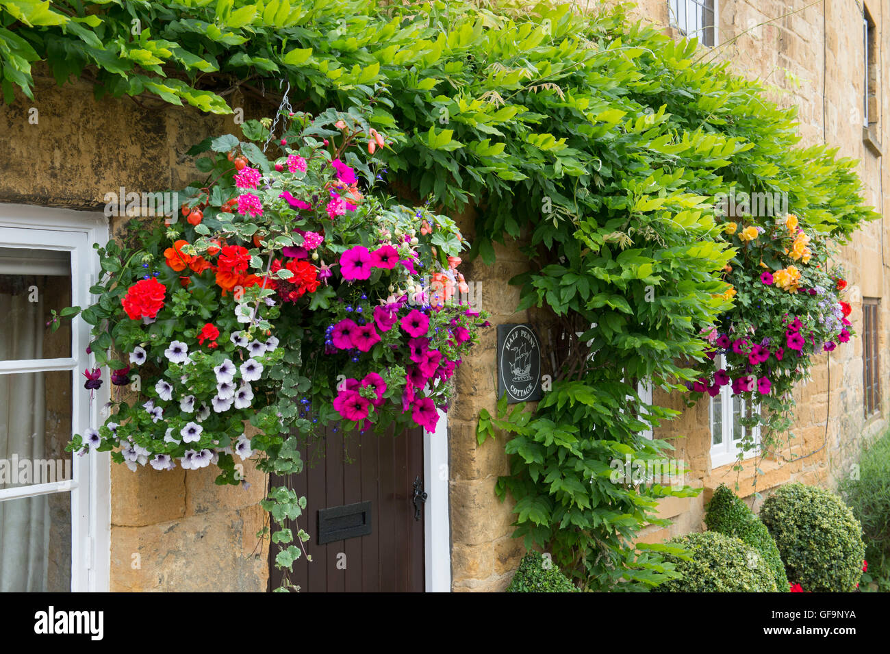 Hanging Basket And Clipped Box Hedge Plants Outside A Cottage. Broadway,  Cotswolds, Worcestershire