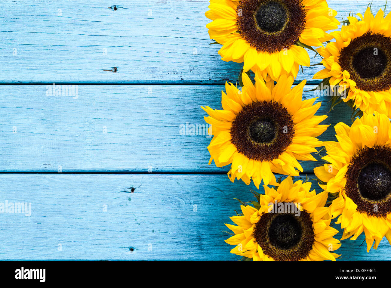 sunflowers heads on wooden background copy space stock