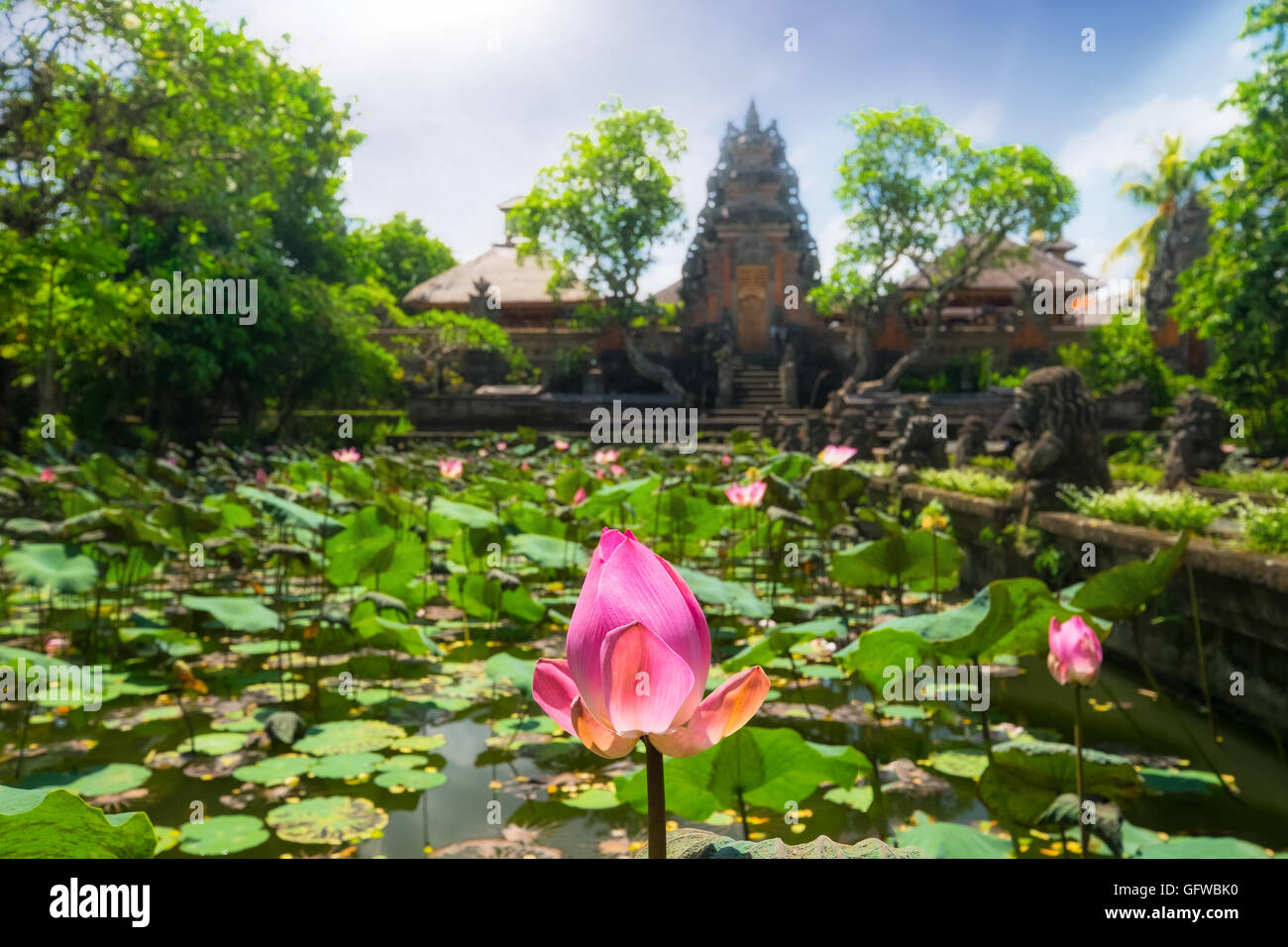 Amazing view of pond with lotus flowers near pura saraswati hindu amazing view of pond with lotus flowers near pura saraswati hindu temple in ubud bali indonesia dhlflorist Choice Image