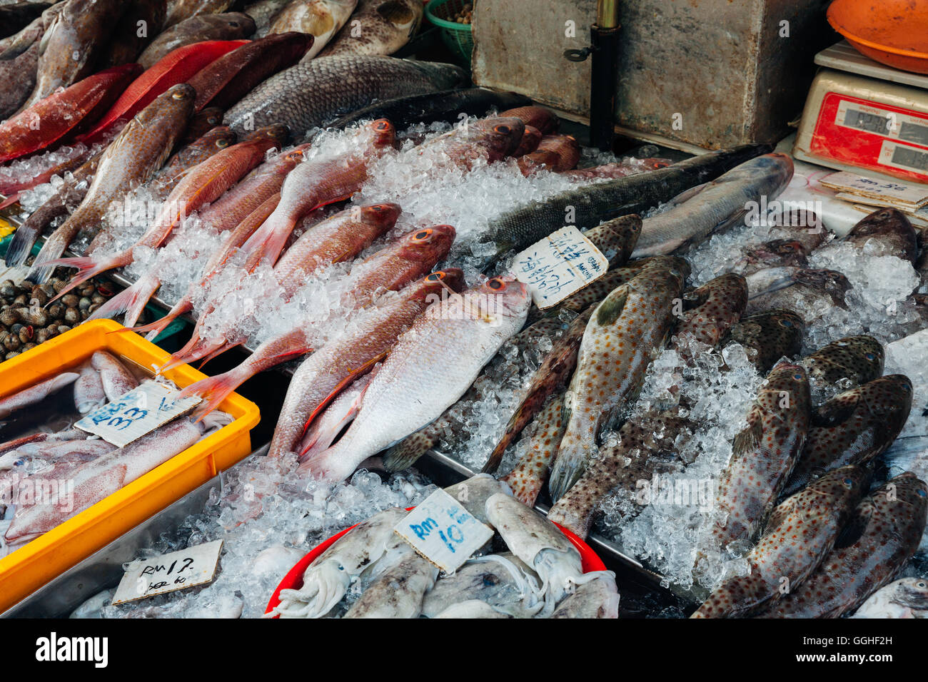 Fresh fish on the ice at the fish market of penang george for Hagen s fish market