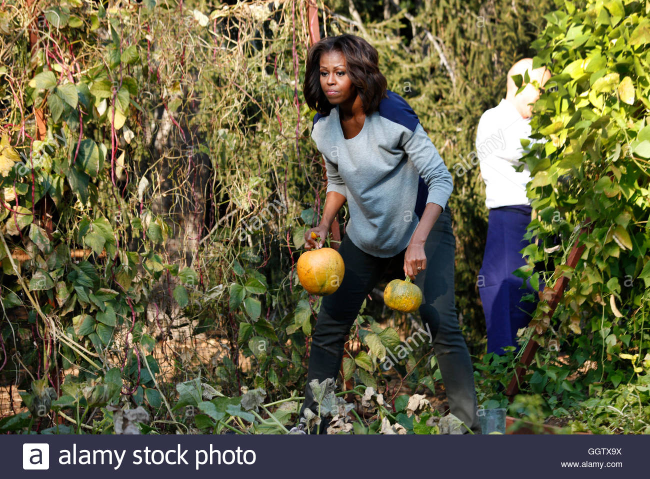 White House Kitchen Garden Us First Lady Michelle Obama Harvests Pumpkins In The White