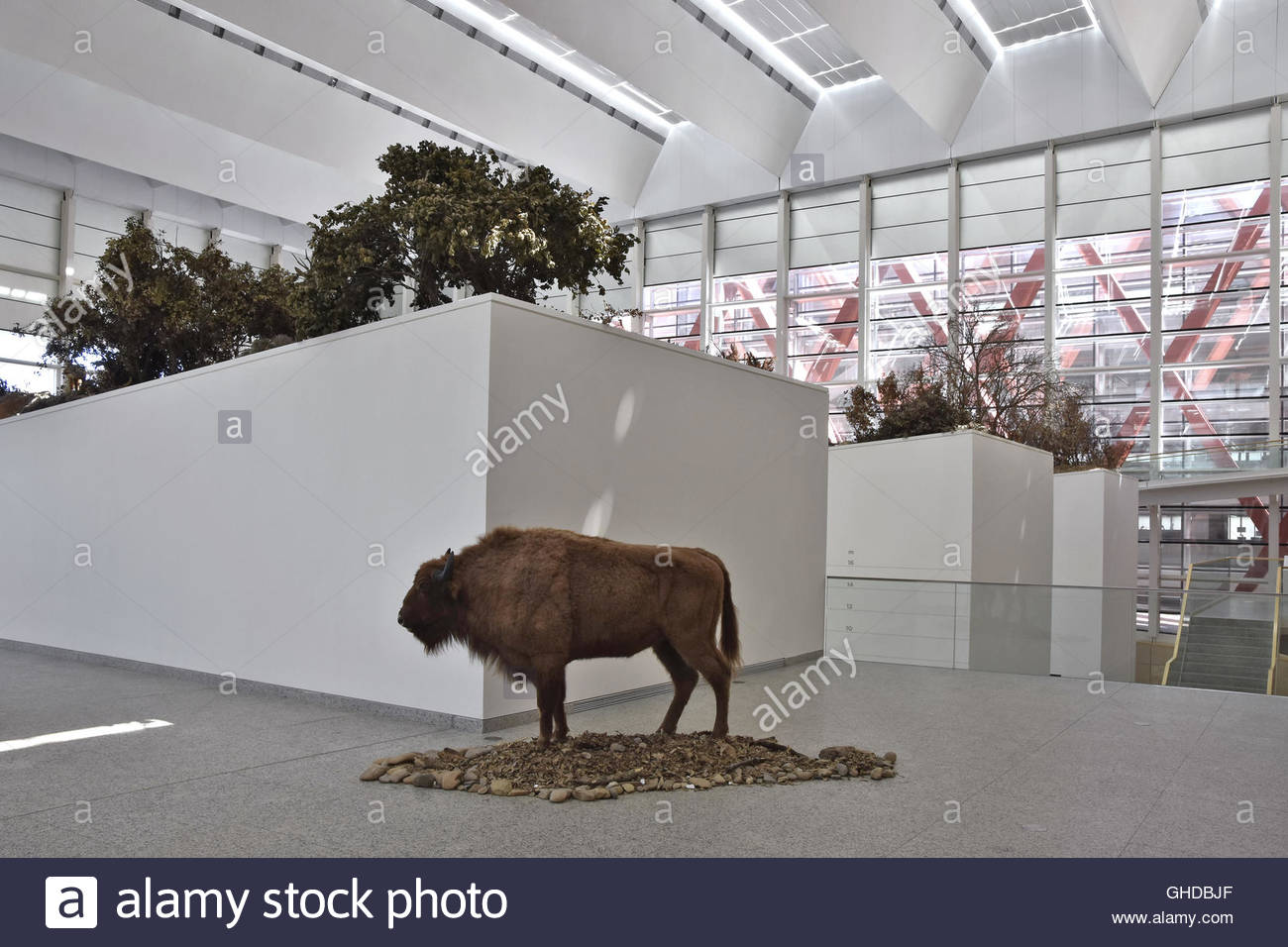 Museum of Human Evolution (Museo de la Evolución Humana) interior Stock Photo...