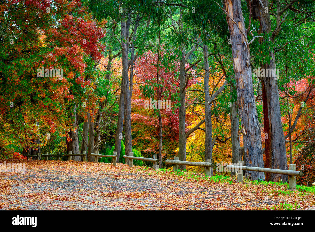 Colourful autumn trees in adelaide hills south australia for Garden trees adelaide