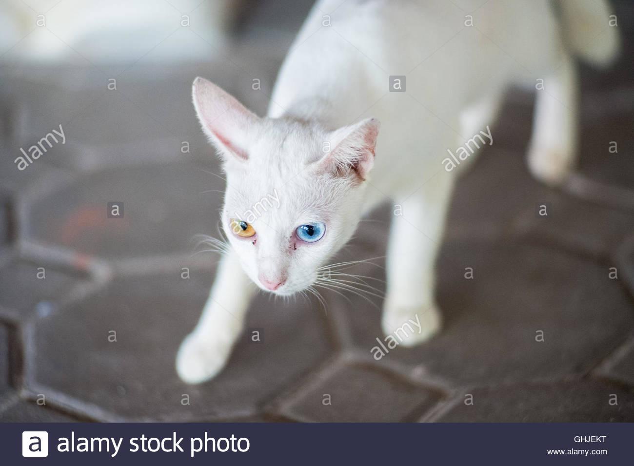 cat brown recluse bite
