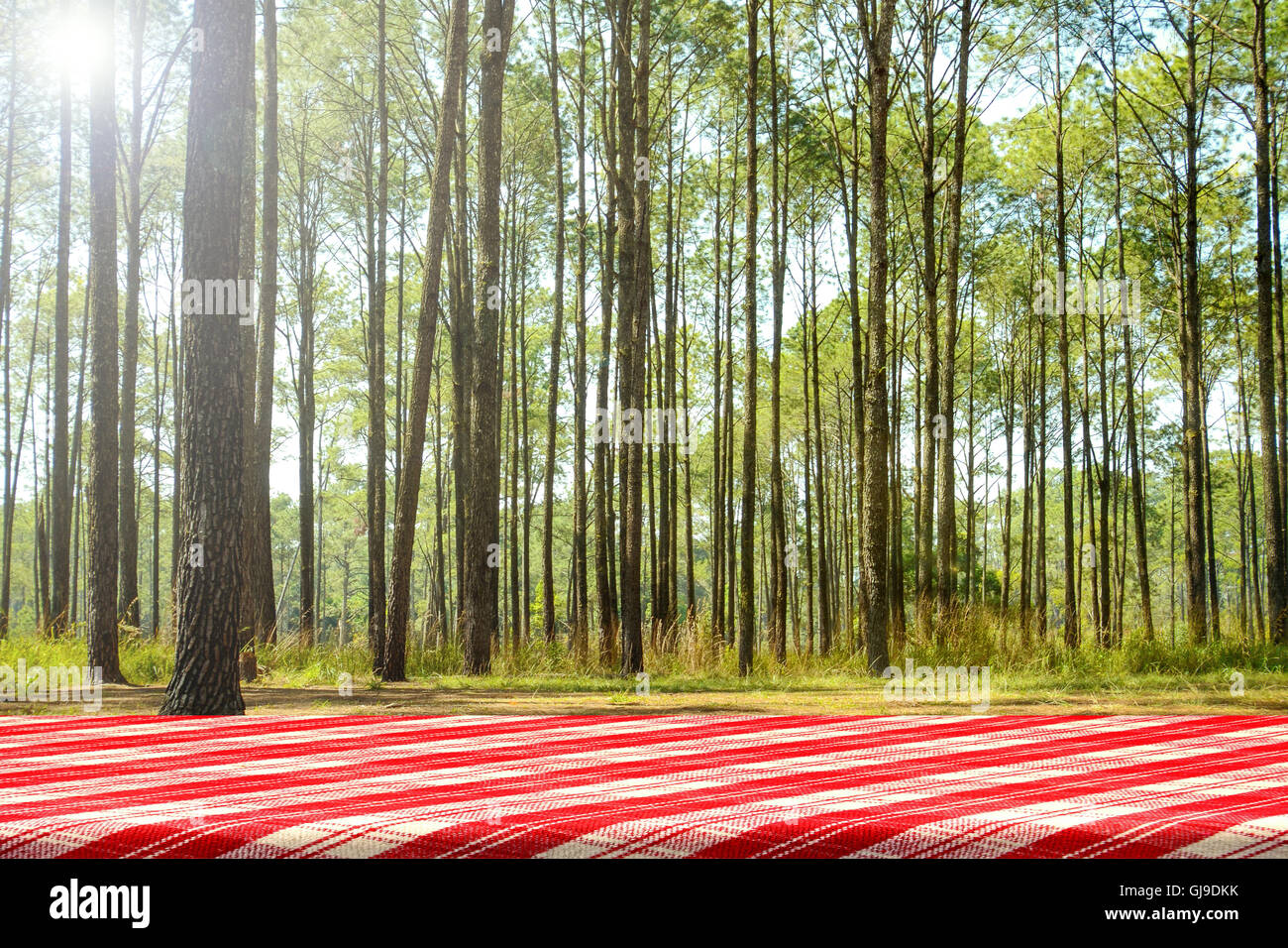 Picnic Table Background picnic table in the pine forest. forest picnic background stock