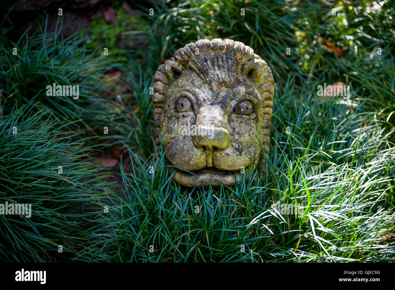 Lion Face Sculpture In The Monte Touristic Garden Of Funchal