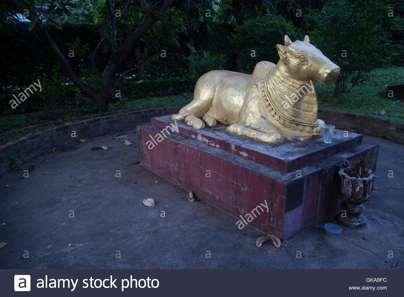 Horizontal Medium View Of Golden Brahmin Cow Statue At Dusk In An Asian  Garden; In The Hindu Religion, The Cow Is Revered