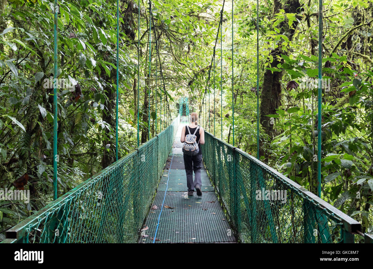 Woman tourist walking on a canopy bridge Monteverde canopy bridges walk Monteverde Costa Rica Central America & Woman tourist walking on a canopy bridge Monteverde canopy ...