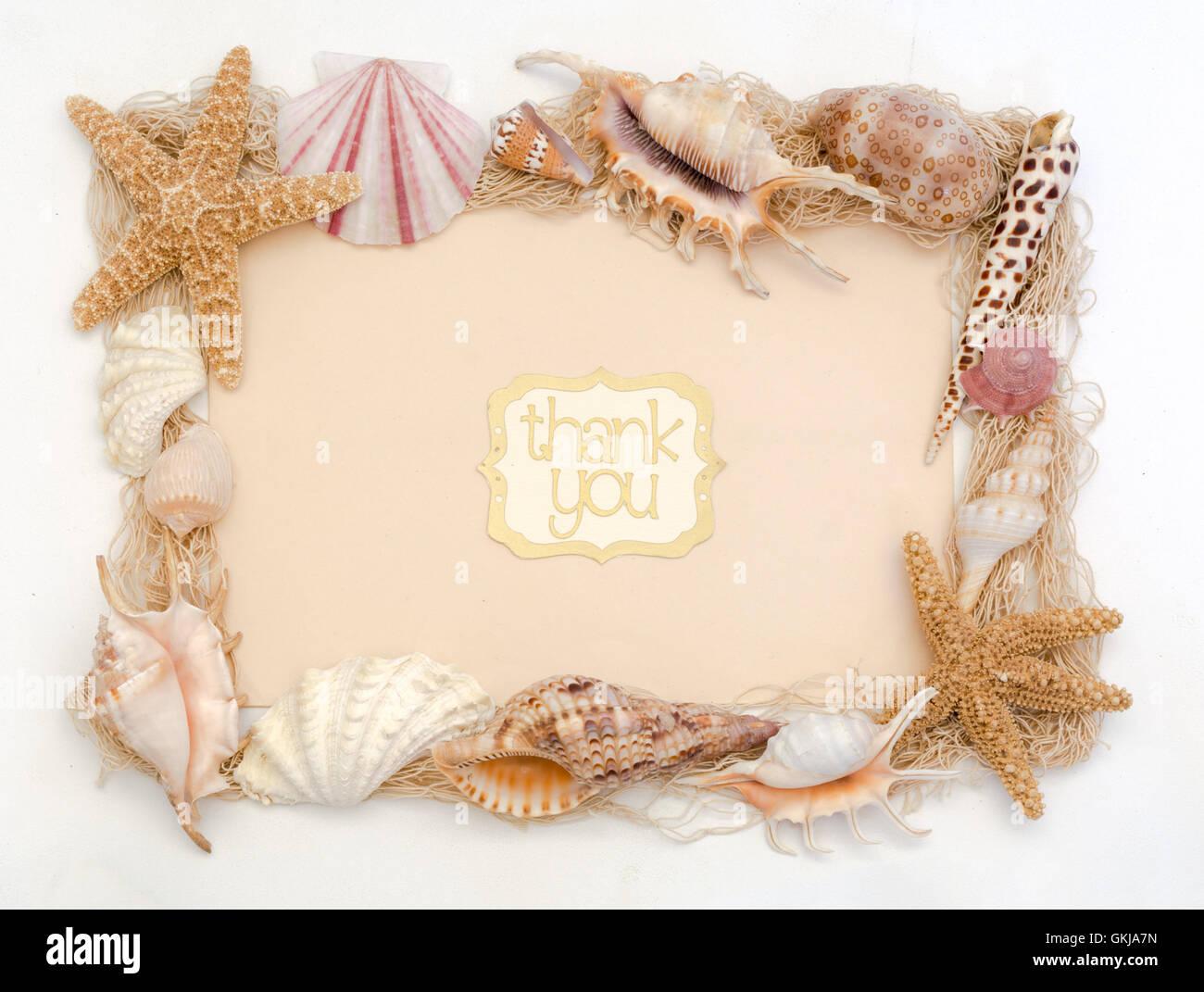 Beach shells thank you card stationery greeting stock photo beach shells thank you card stationery greeting kristyandbryce Choice Image