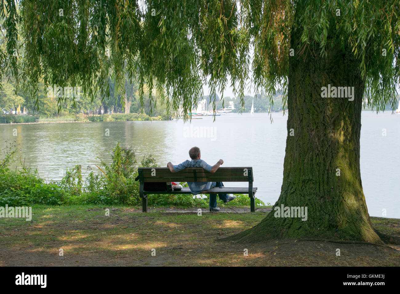 Man Relaxing On A Park Bench With Lake And Big Tree Trunk