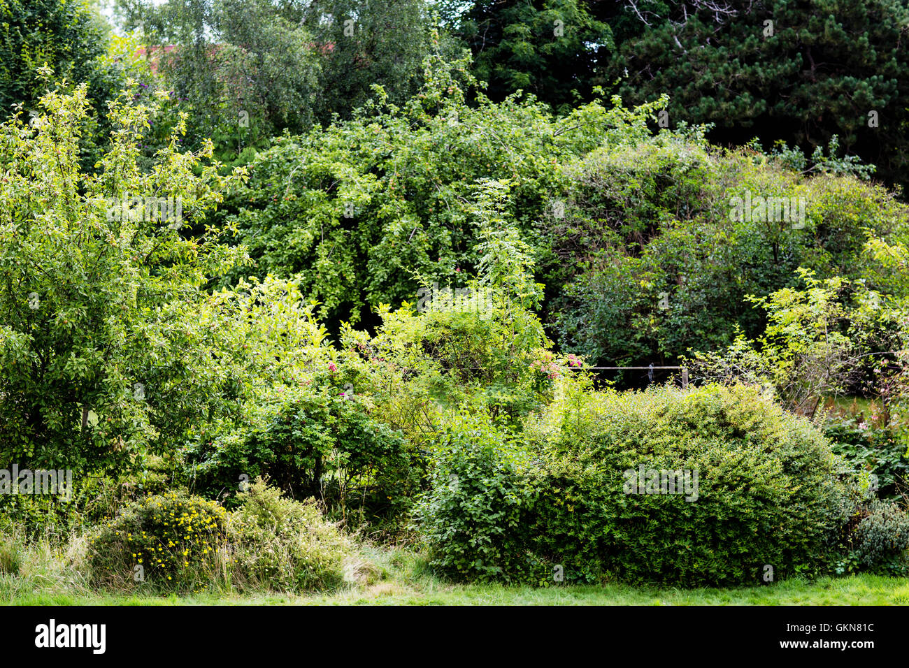 dense wild undergrowth and bushes outside in various shades of