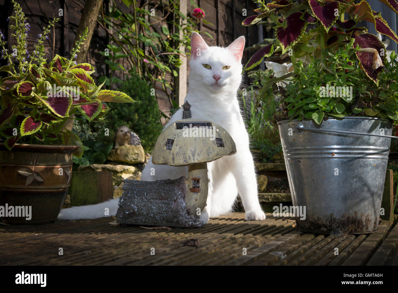 White cat sitting on garden decking amongst potted plants for Garden decking ornaments