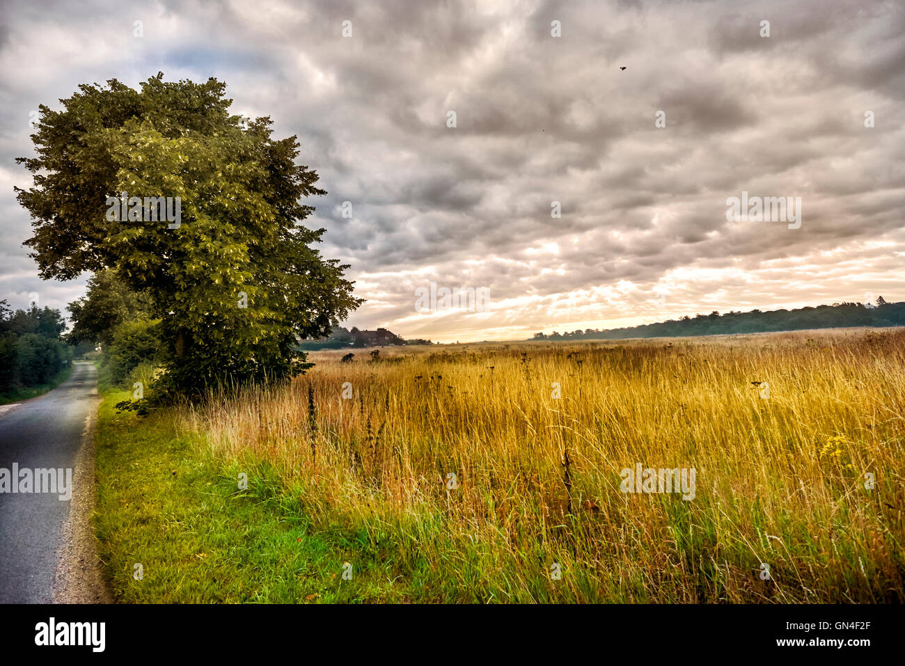 Beautiful english countryside stunning landscape over english beautiful english countryside stunning landscape over english countryside landscape in summer sunrise english country lane at sciox Images