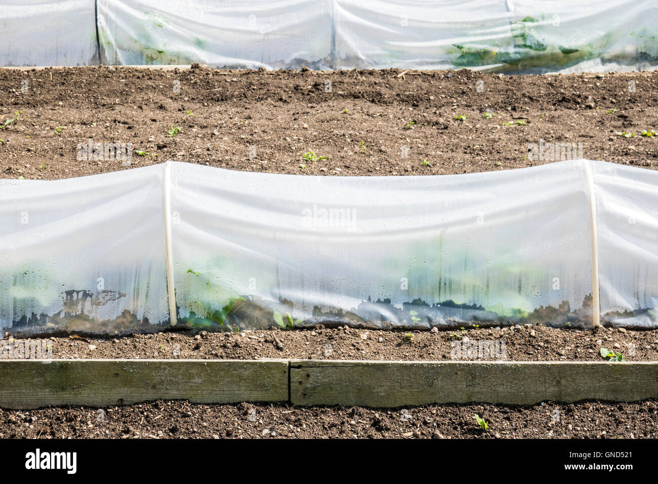 Garden Covers For Vegetables Part - 39: Growing Vegetables With Plastic Cover As Protection In Garden. Concept Of  Gardening, Plant Cultivation