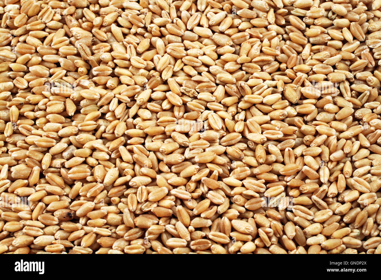 how to cook wheat kernels