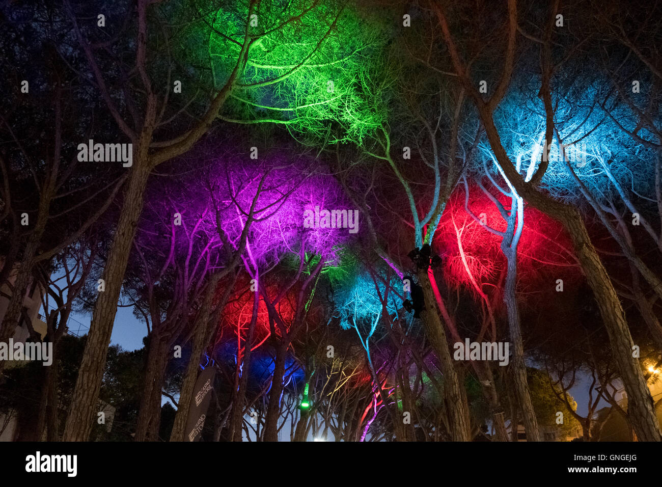 Lights in the trees decorate the canopy for the Estoril Craft Fair & Lights in the trees decorate the canopy for the Estoril Craft Fair ...