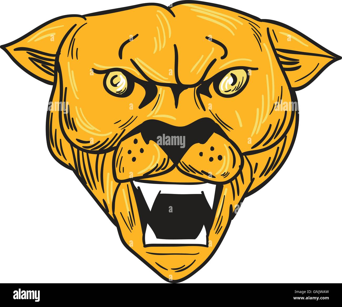 angry cougar mountain lion head drawing stock vector art