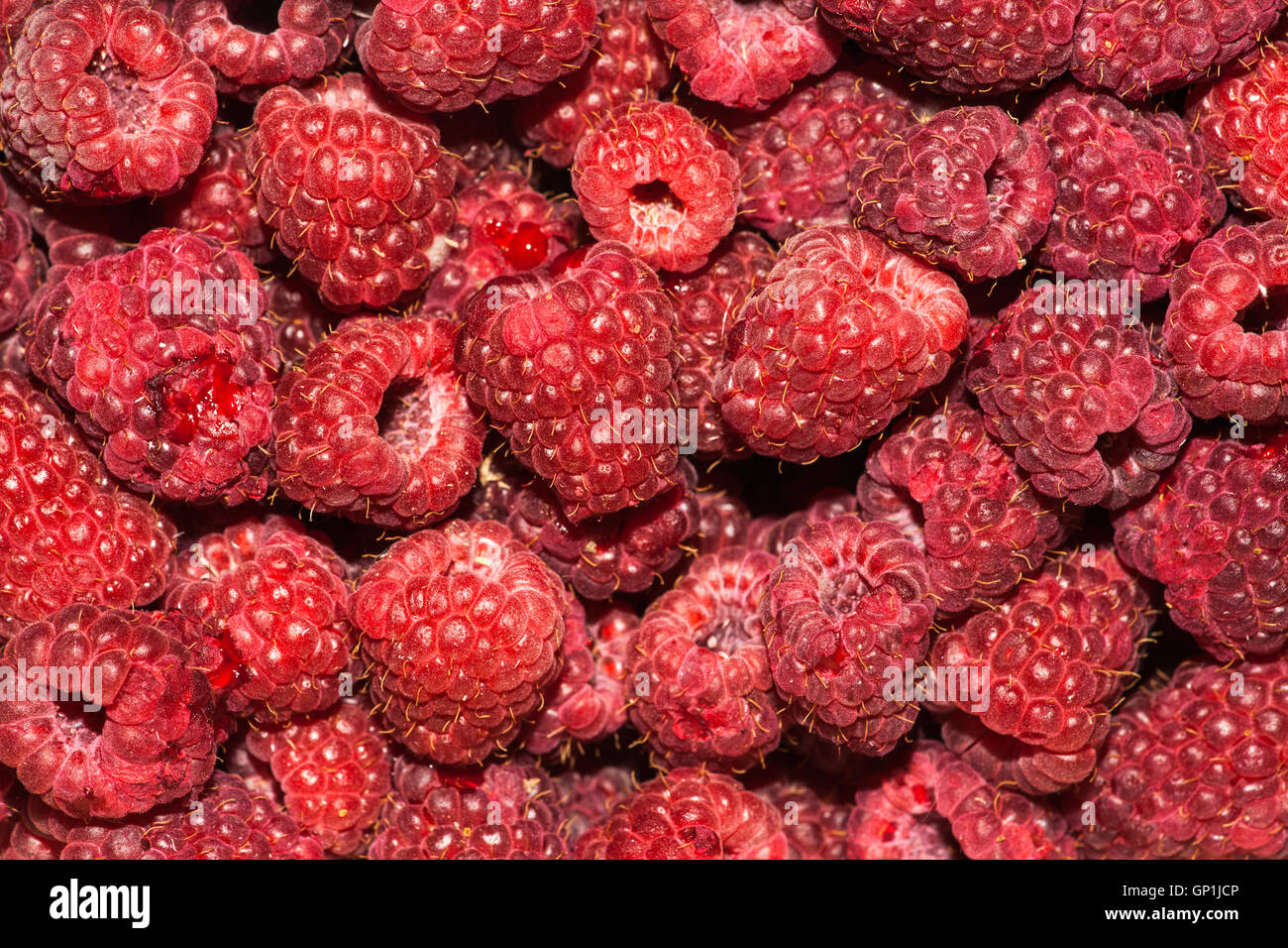 A pile of red yummy raspberry berries closeup view raspberry a pile of red yummy raspberry berries closeup view raspberry symbolizes love patience protection and fertility biocorpaavc