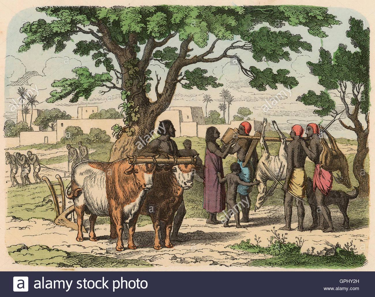 Ancient Egypt Farming Stock Photos & Ancient Egypt Farming Stock ...