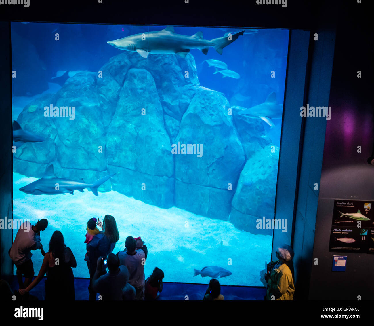 Public Aquarium Camden Nj Stock Photo Royalty Free