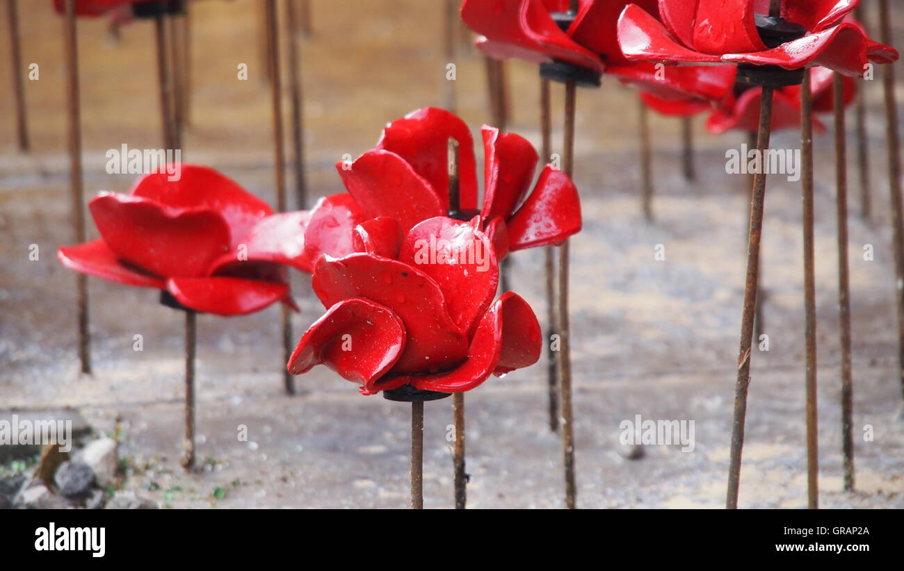 High angle view of wet artificial poppy flowers made from ceramic high angle view of wet artificial poppy flowers made from ceramic mightylinksfo Choice Image