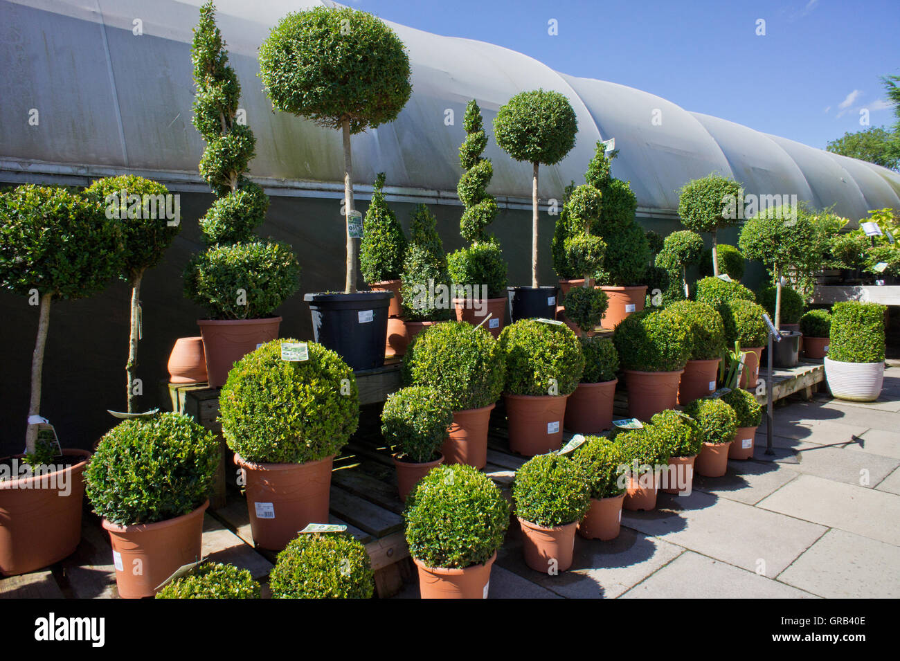 Three lines of assorted evergreen shrubs and trees for Evergreen shop