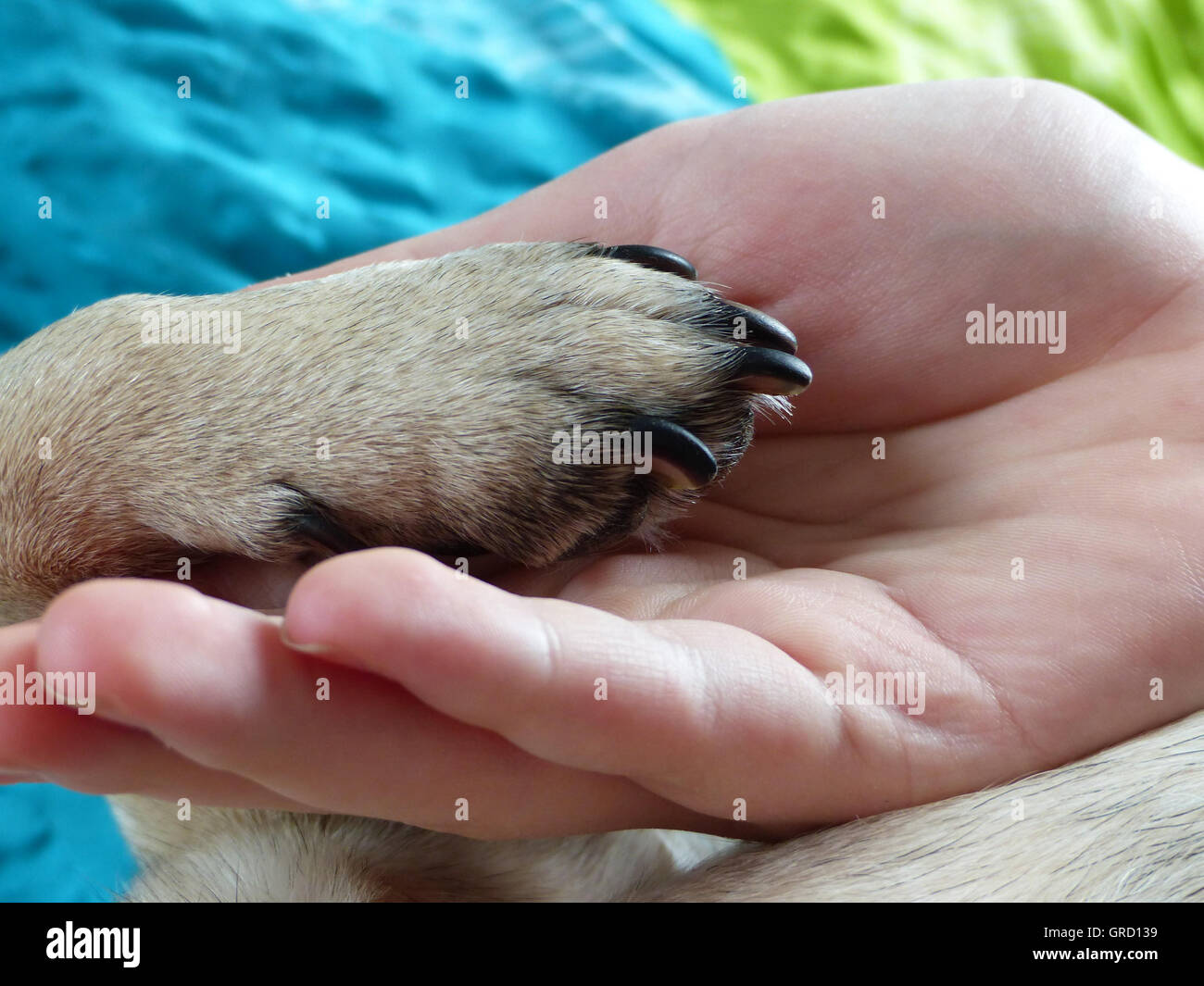 Dog paw is in human hand dog gives paw symbol for friendship dog paw is in human hand dog gives paw symbol for friendship detail biocorpaavc Images