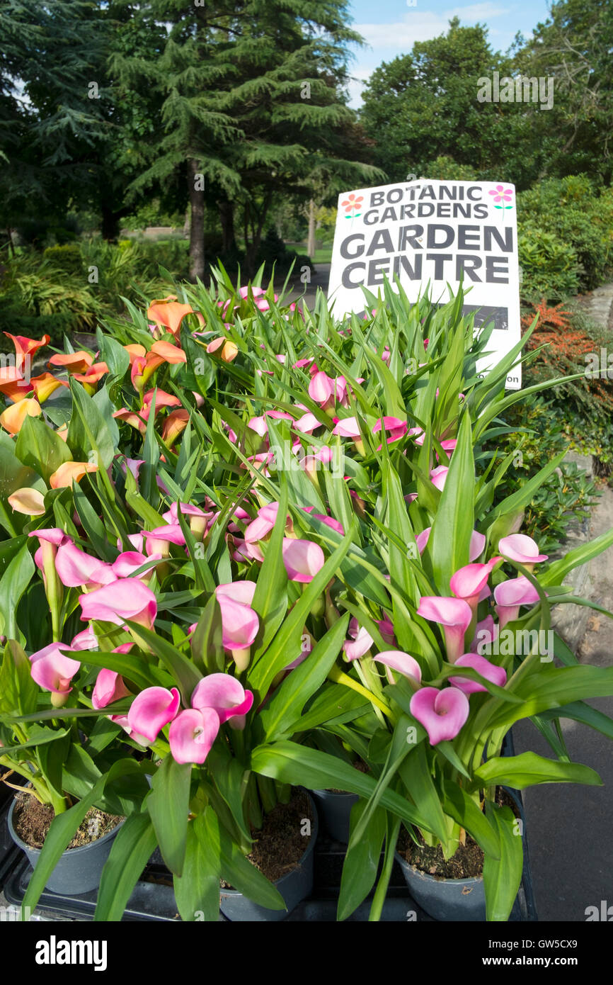 Plants for flower beds - Flower Beds And Plants For Sale In The Botanic Gardens Southport Merseyside Uk