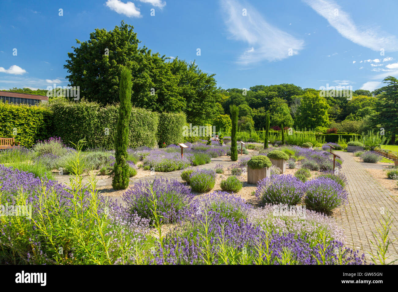 Stunning The Lavender Garden At Buckfast Abbey Completed  A  With Exciting The Lavender Garden At Buckfast Abbey Completed  A Benedictine  Monastery In Buckfastleigh With Extraordinary Gardening Life Magazine Also Climbing Frames For Small Gardens In Addition Childrens Garden Table And Chairs And Shropshire Gardens As Well As What To Do In The Garden Route Additionally Belgium Restaurant Covent Garden From Alamycom With   Exciting The Lavender Garden At Buckfast Abbey Completed  A  With Extraordinary The Lavender Garden At Buckfast Abbey Completed  A Benedictine  Monastery In Buckfastleigh And Stunning Gardening Life Magazine Also Climbing Frames For Small Gardens In Addition Childrens Garden Table And Chairs From Alamycom