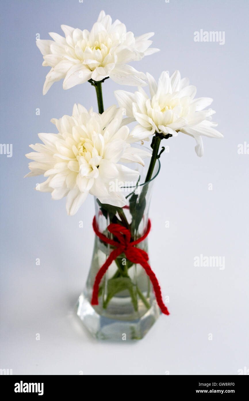 White flowers in a small glass vase with a red bow stock photo white flowers in a small glass vase with a red bow floridaeventfo Images