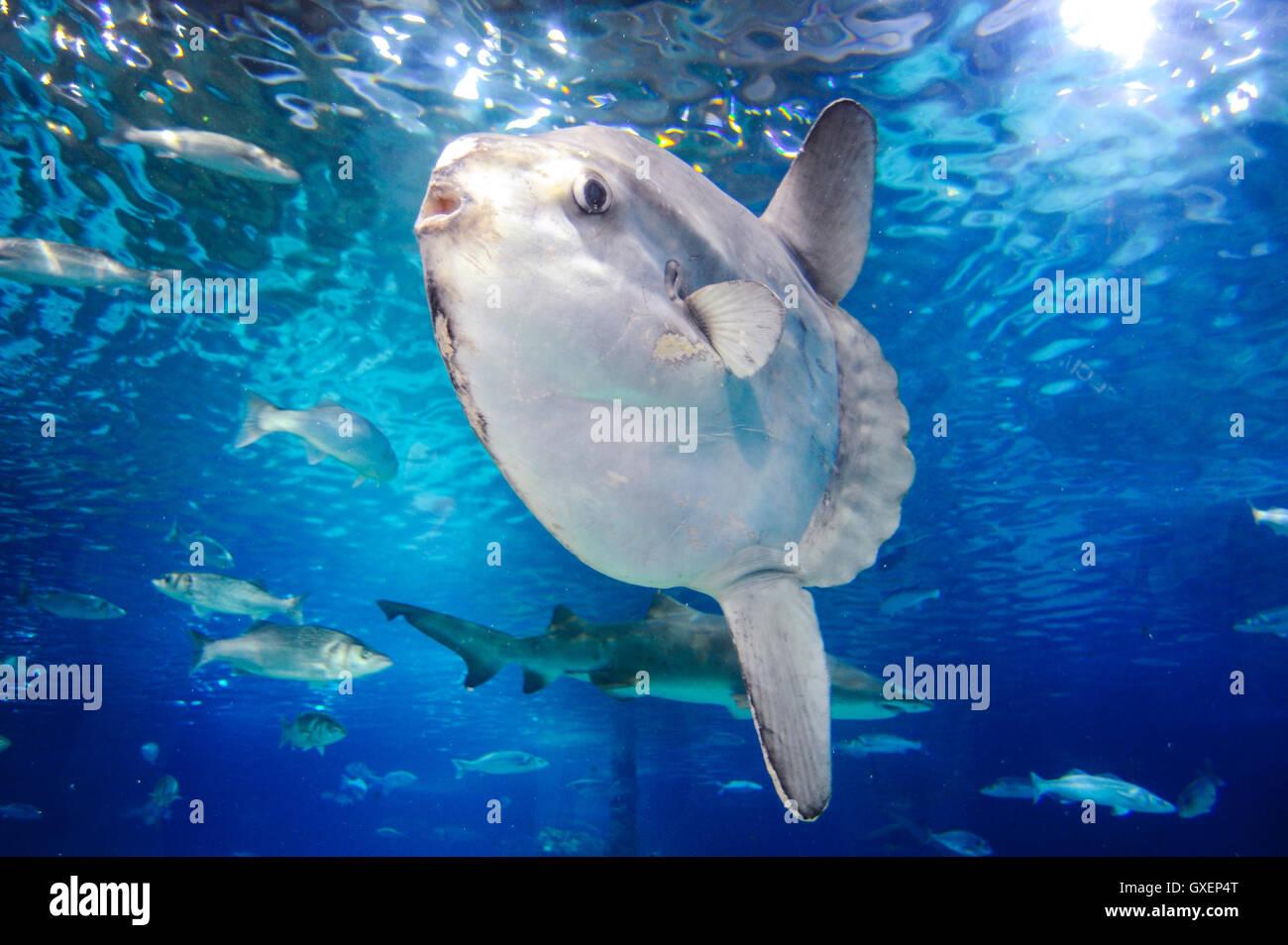 Spain barcelona aquarium barcelona located in port vell for Aquarium de barcelona