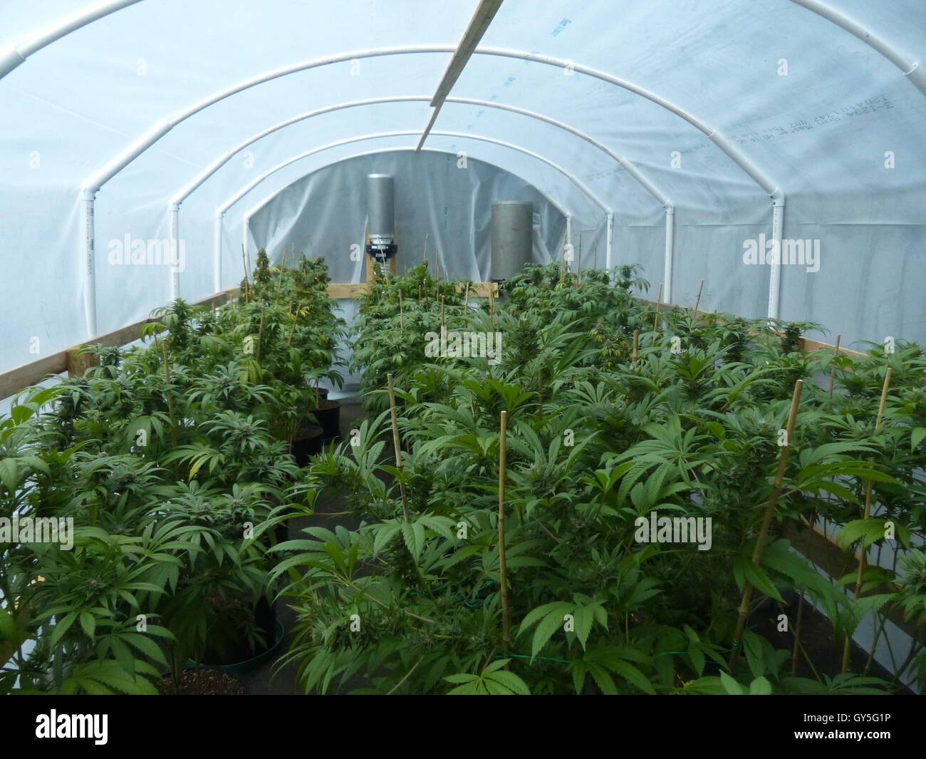 Illegal marijuana plantation stock photo royalty free for Cannabis plantation interieur