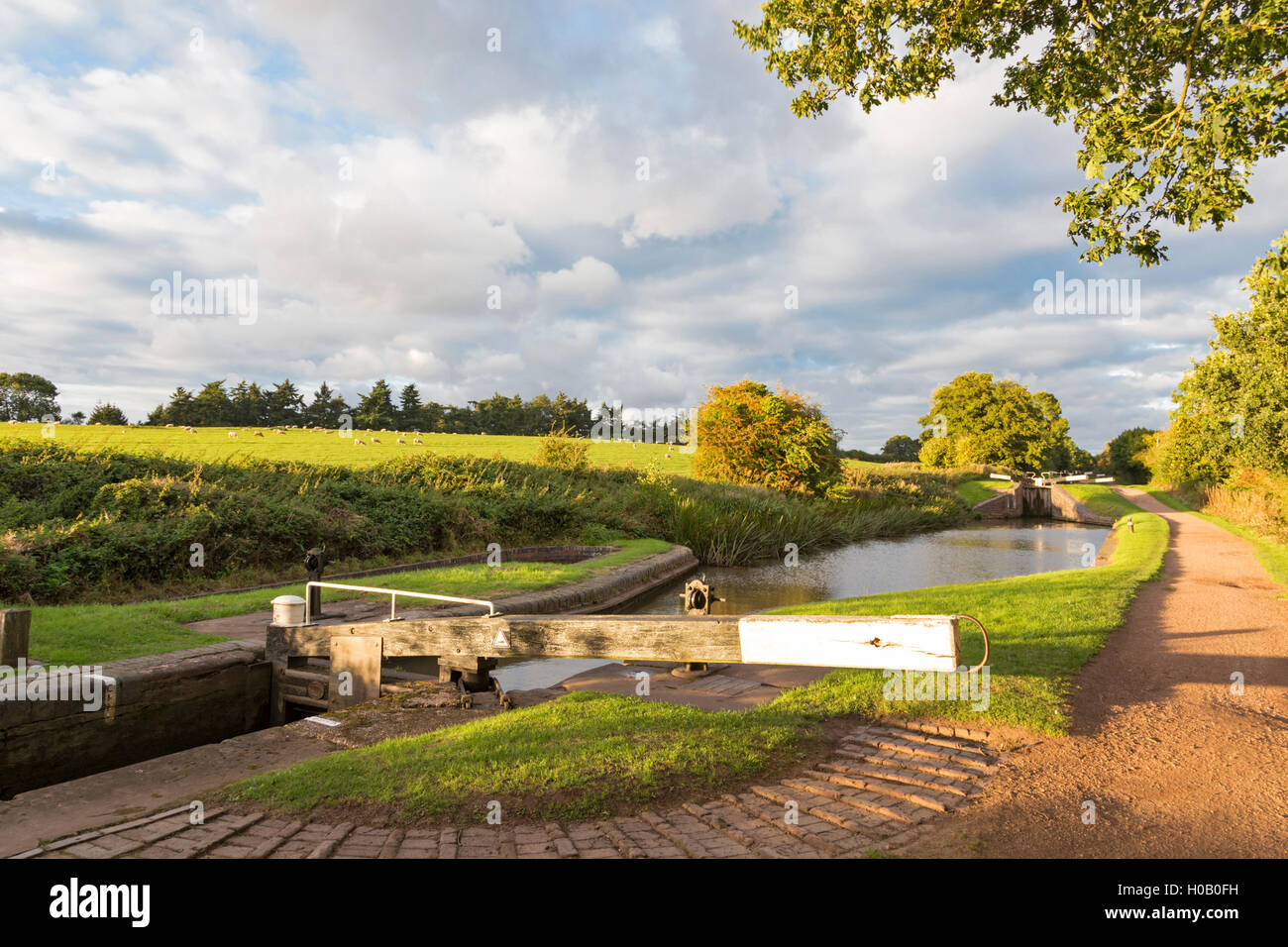 a summers evening on the worcester birmingham canal at. Black Bedroom Furniture Sets. Home Design Ideas
