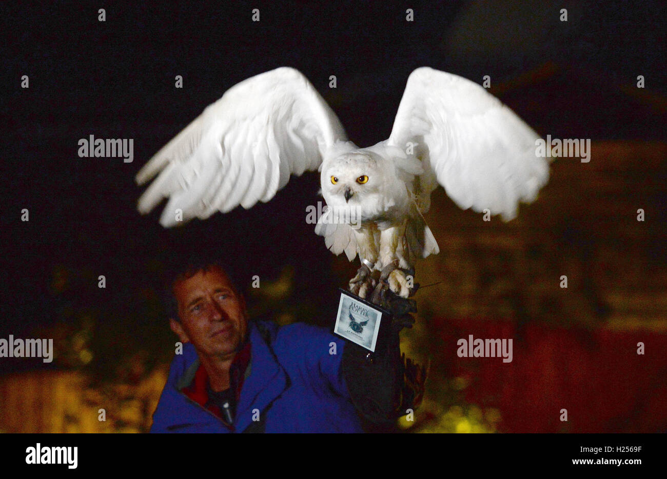 Snow Owl 'hedwig' Flies With A Kindle Ebook Reader Showing The Cover Of The  New Harry Potter Book 'harry Potter And The Cursed Child' Through A Garden