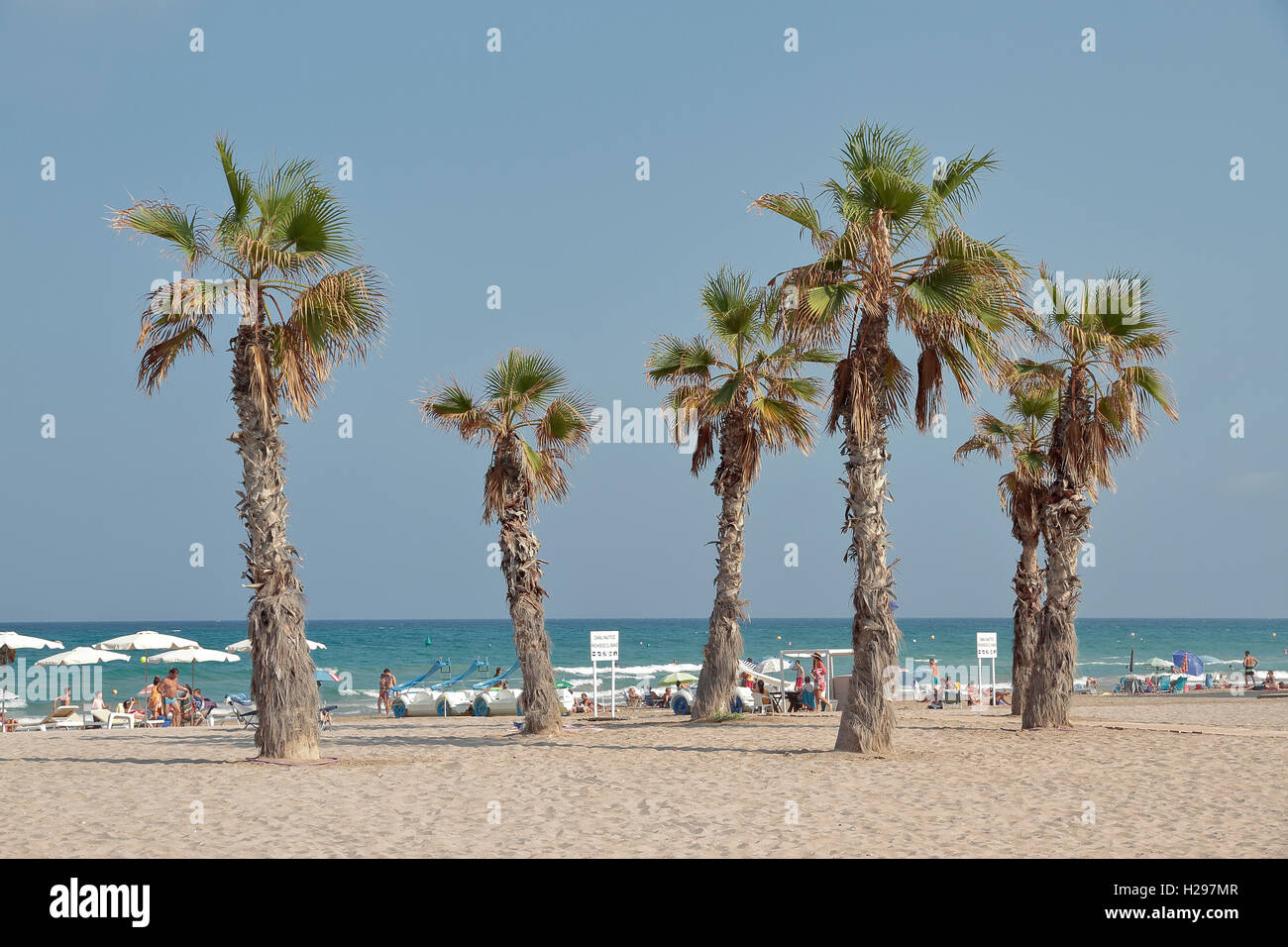 Beach Landscape With Palm Trees On Foreground In San Juan Alicante Spain