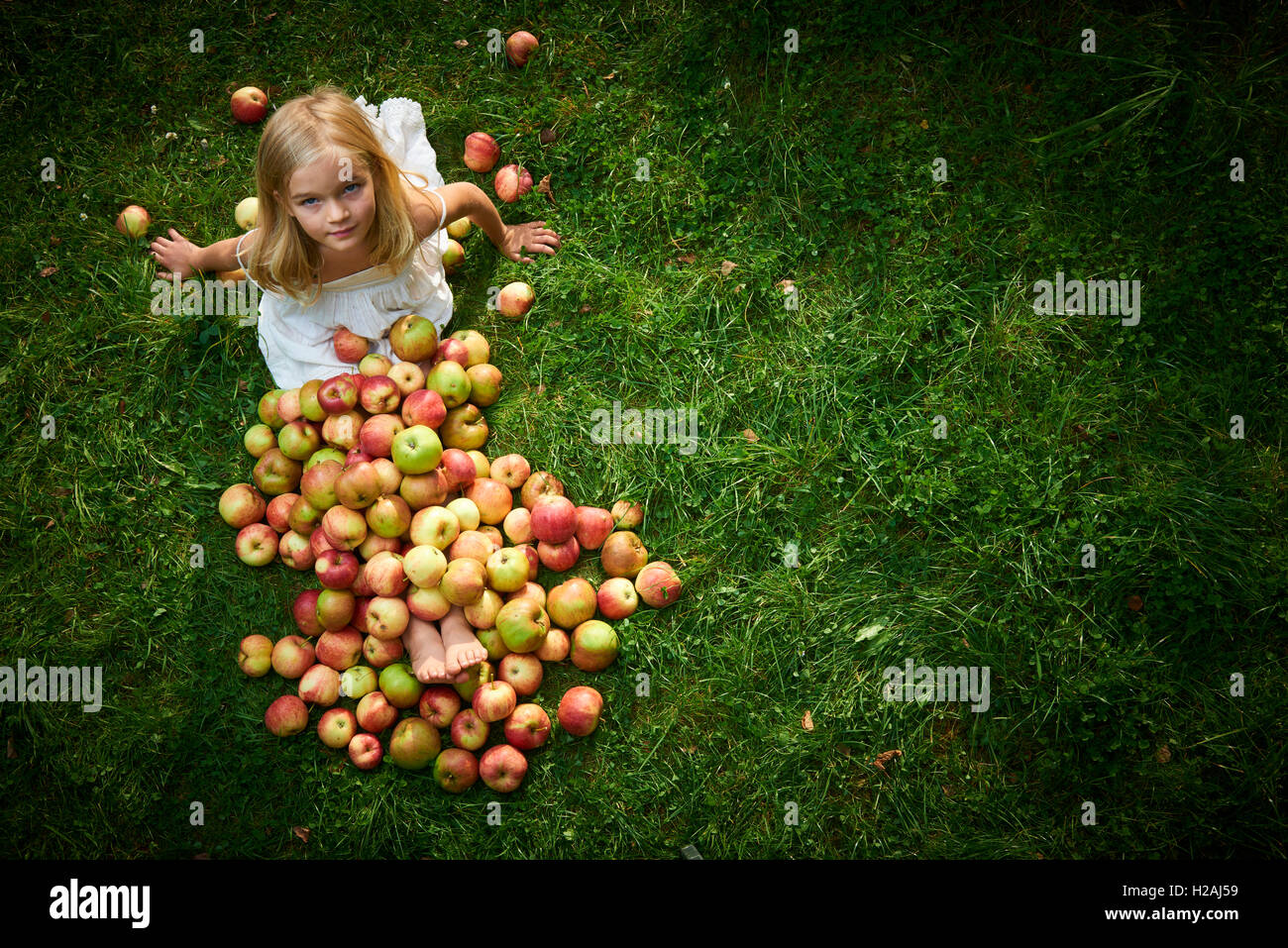 little cute girl collects the apples scattered on a grass in a