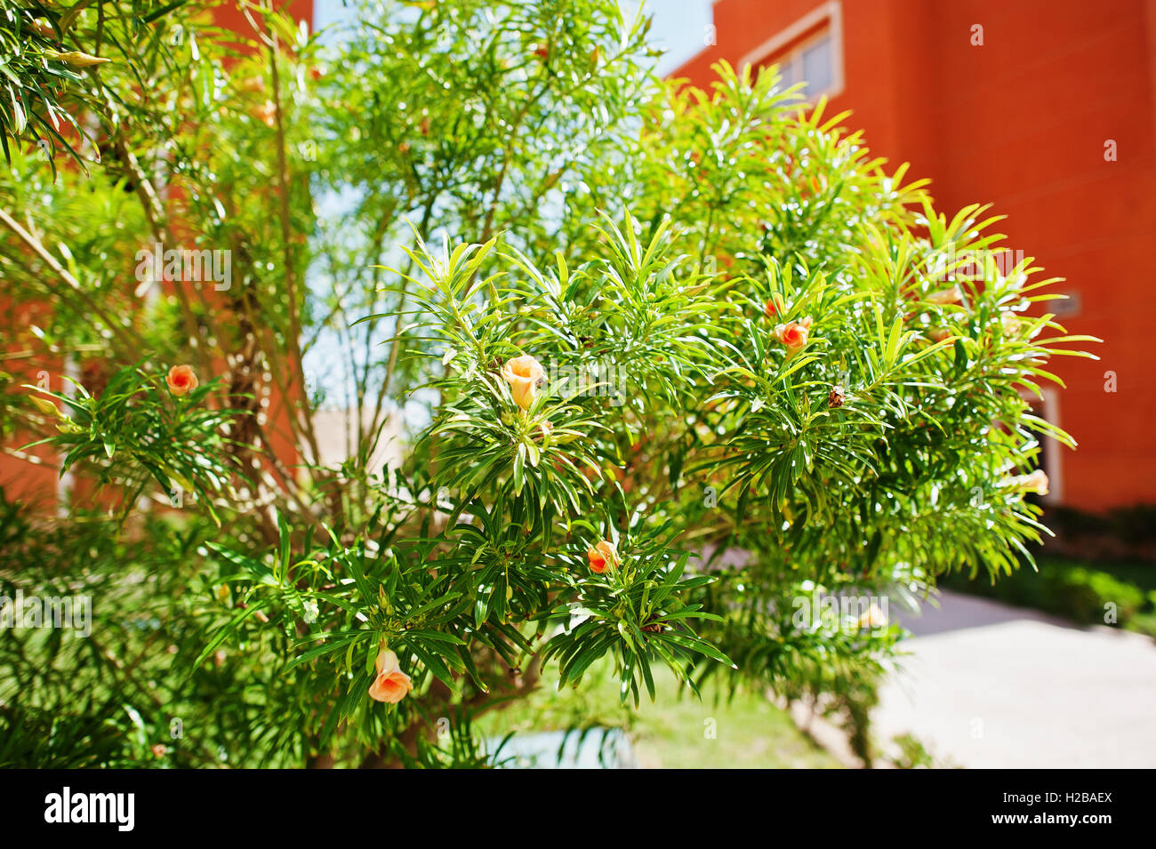 Decorative bushes and trees on courtyard of resort garden Stock ...