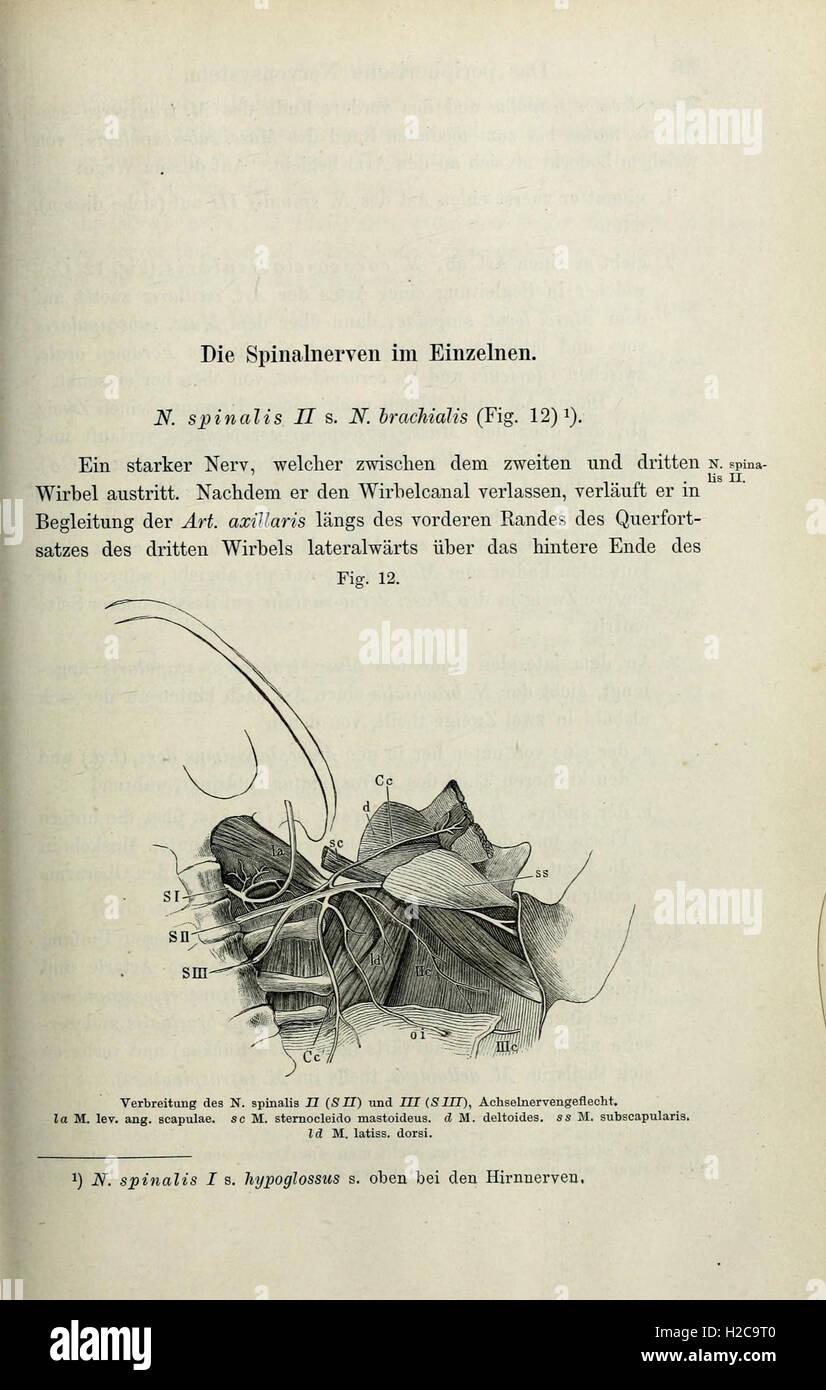 Groß Dritte Nerv Anatomie Zeitgenössisch - Menschliche Anatomie ...