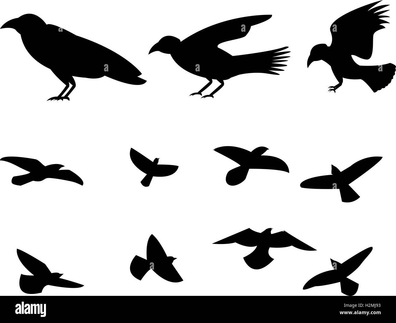 silhouette flying raven bird vector design stock vector art