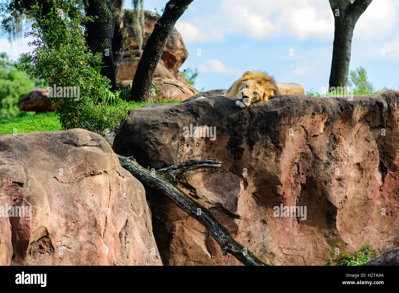 the lion king royalty in the animal kingdom Animal stereotyping in general many animal stereotypes reflect anthropomorphic notions unrelated to animals' true behaviors carnivores, for instance, will be viewed as antagonists and their prey as the underdogs.