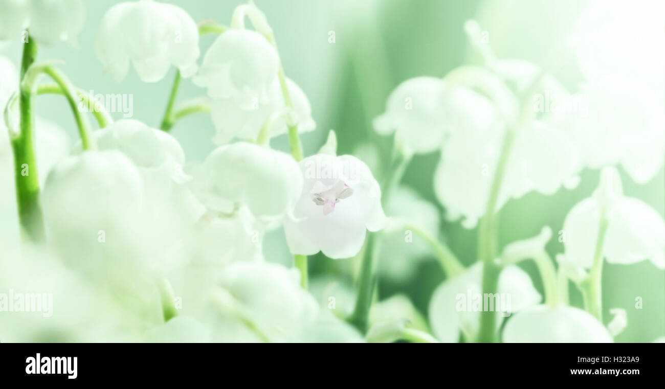 White delicate lily of the valley like symbol of purity and stock white delicate lily of the valley like symbol of purity and springtime izmirmasajfo Choice Image