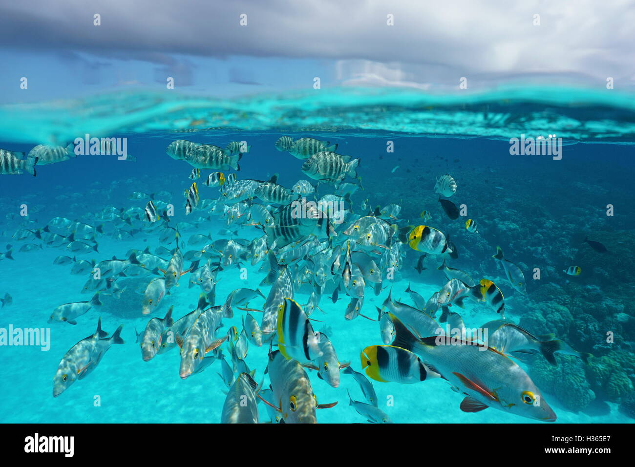above and below sea surface shoal of tropical fish underwater