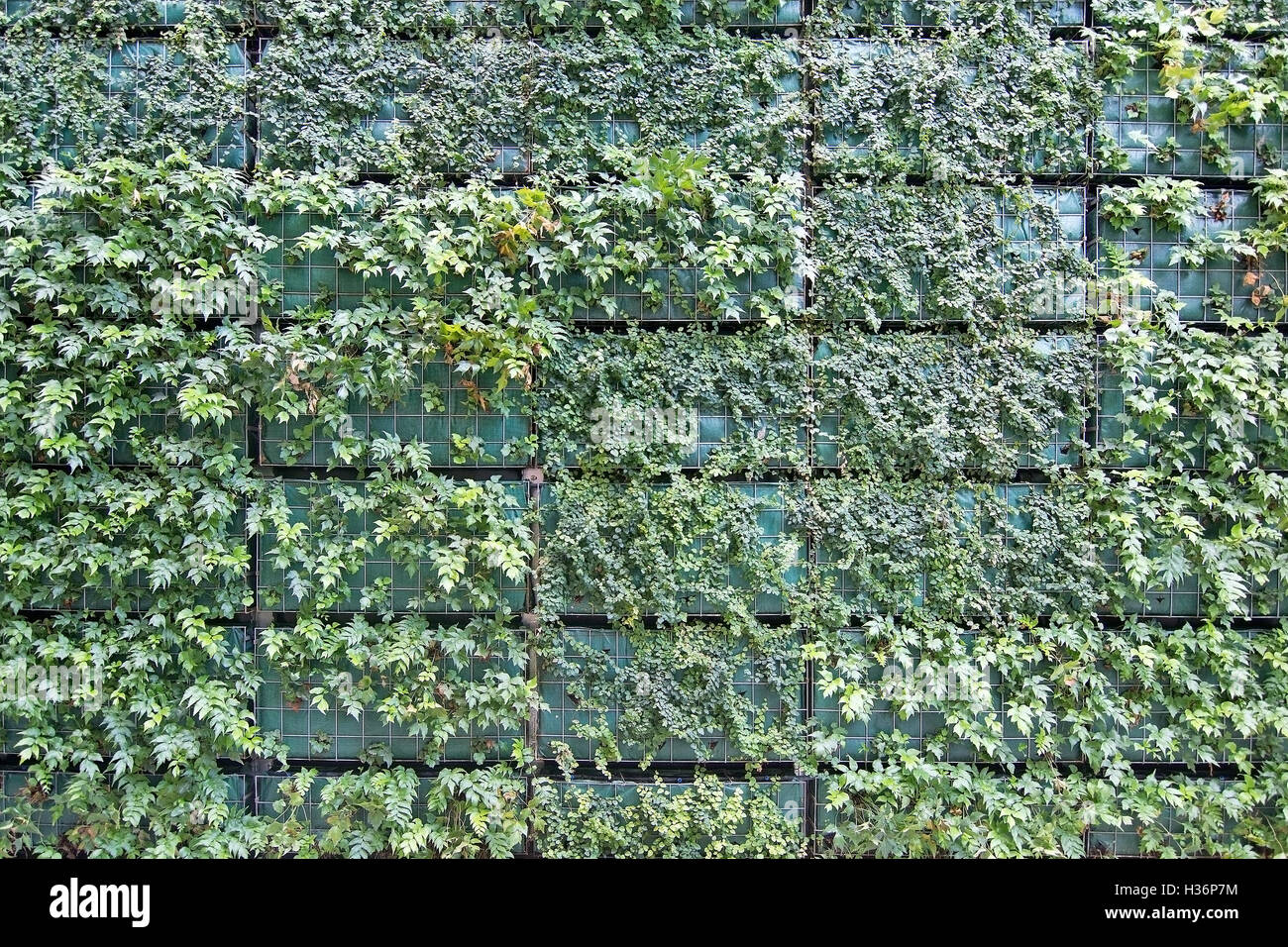Green Wall Vertical Garden Grid With New Fresh Plants