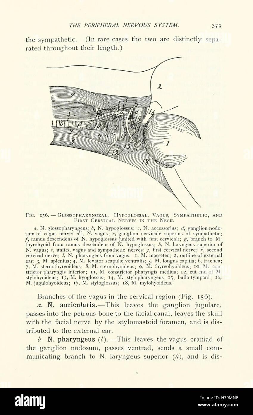 Großzügig Artikulationen In Der Anatomie Galerie - Anatomie Von ...
